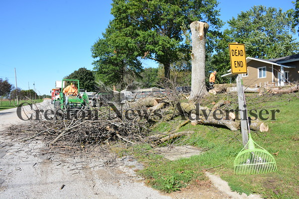 10-5 Tree Removal