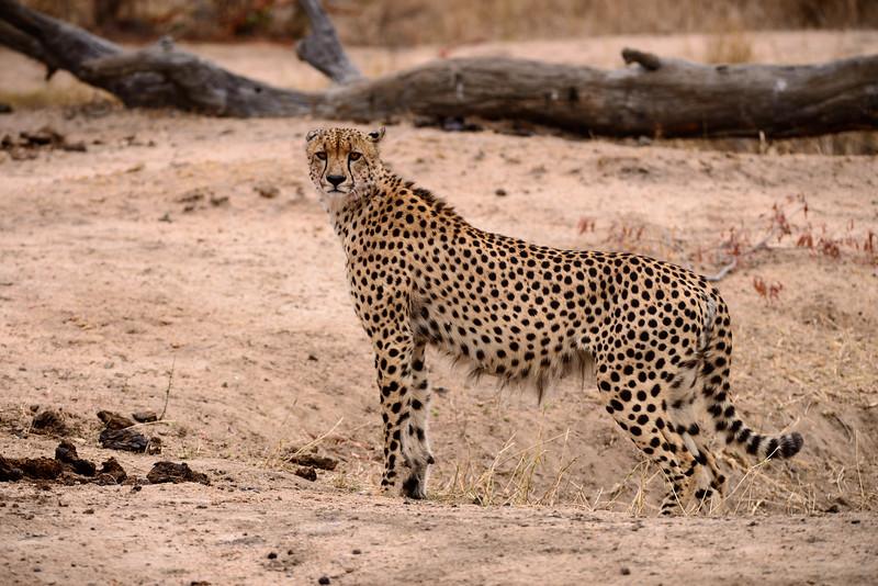 LeopardHills-20150827-5219.jpg