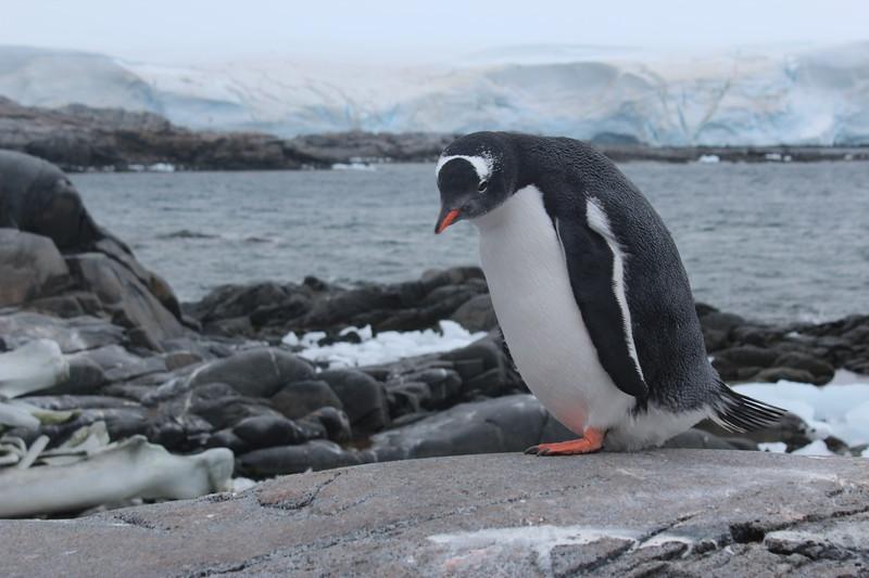 Antarctica 298.JPG