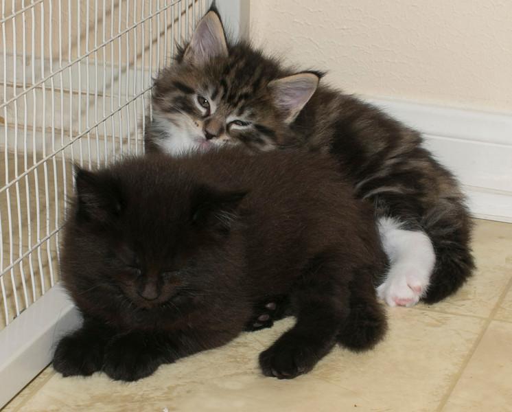 Kittens318.jpg
