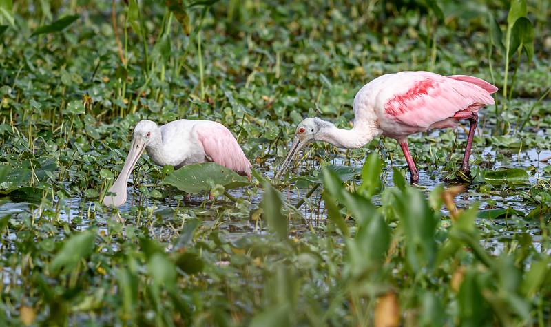 2019-12-31_14-00-59_Orlando Wetlands_850_9505.jpg