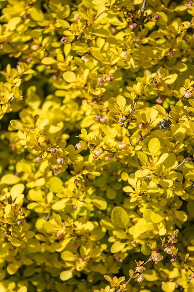 Nana's garden 24 Apr 2020-11.jpg