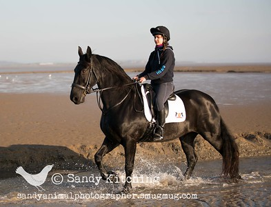 Friesian Experience Jess Oct 2015