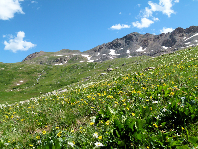 Wildflowers and scenery