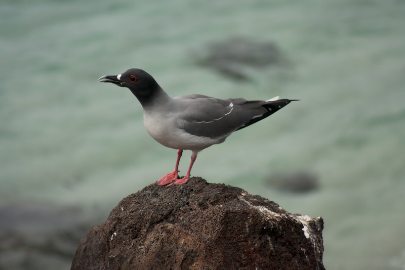 Bird Looking Over the Ocean : Journey into Genovesa Island in the Galapagos Archipelago