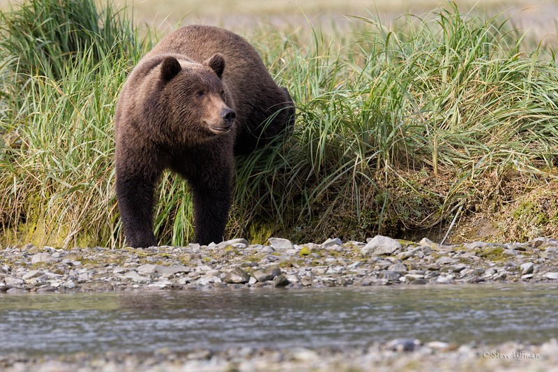 20140903-20140903-_G7Q2613Katmai-Bears-geographic-harboruntitled-shoot-Edit.jpg