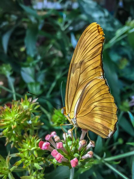 Butterflies at NMNH-17.jpg