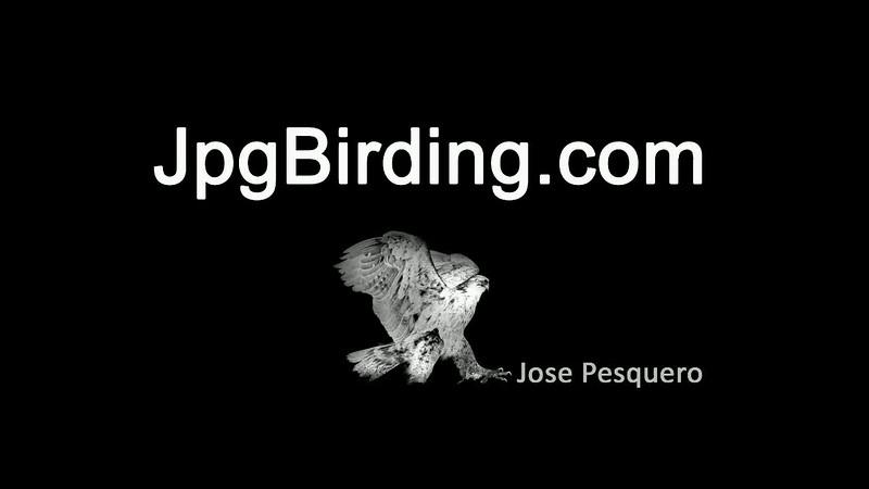 jpgbirding.avi