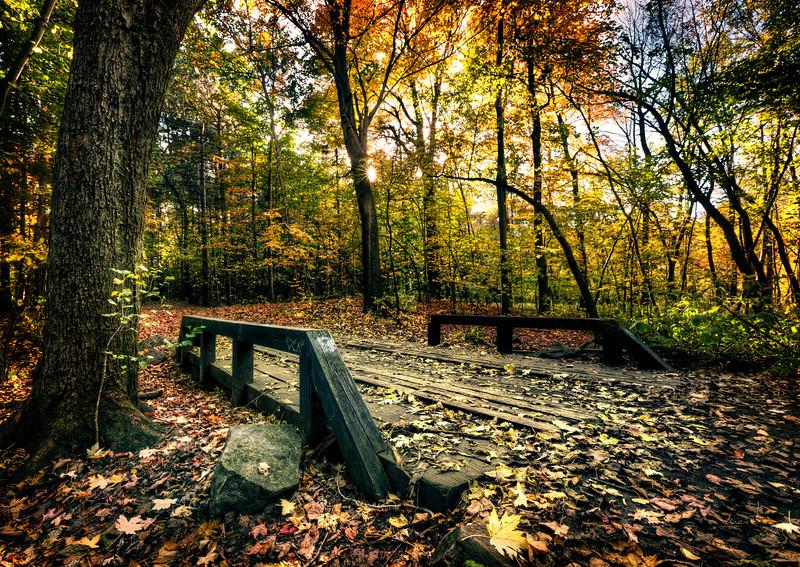 Bridge covered in leaves copy.jpg