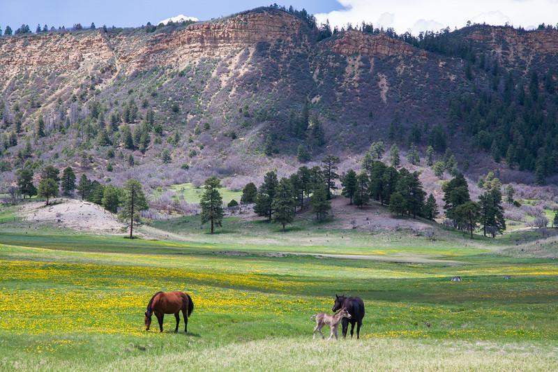 Colorado07-0060.jpg