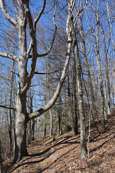 Trombatore Trail - 3,500'