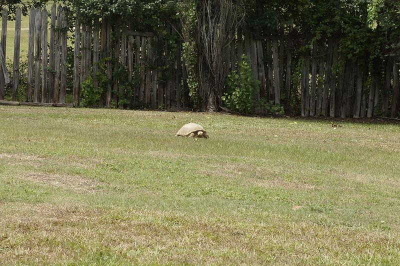 Pine_Tree_Hill_Wildlife_Rescue (100).JPG