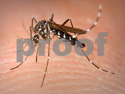 zika-virus-can-kill-brain-tumor-cells-researchers-discover
