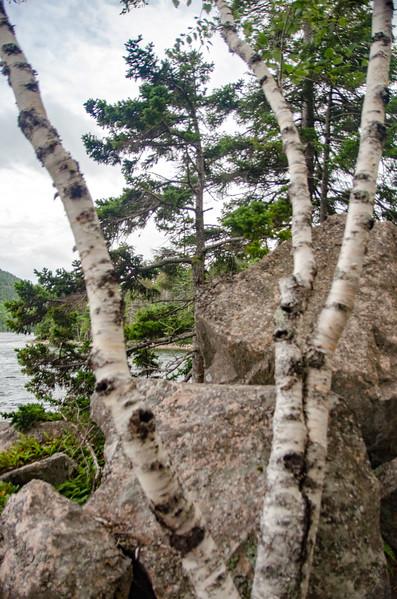 Acadia Nat'l Park-Terry's - July 2017-283.jpg