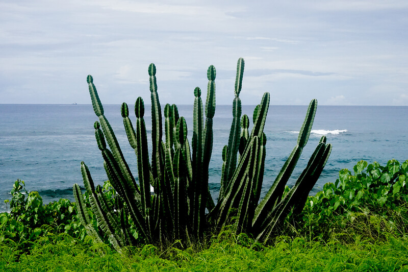 Yes, they even have cactus by the side of the road on the southern side of Kauai