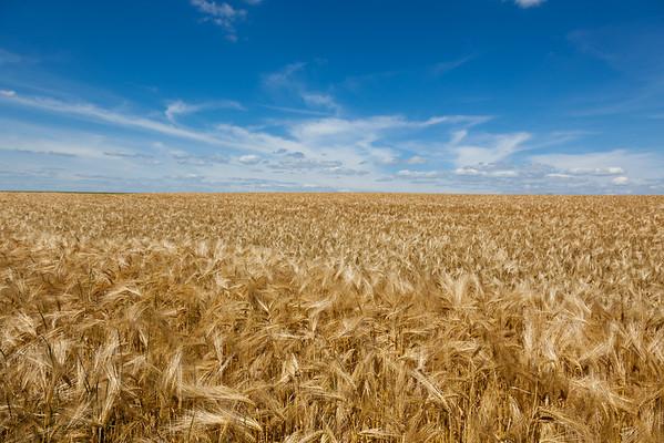 Fields, Lothringen