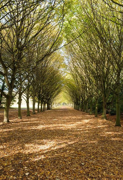 Grounds of Anglesey Abbey, Cambridgeshire