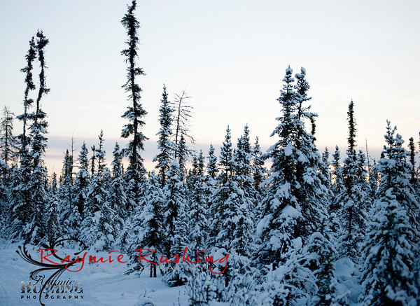 The winter Walk 02.10.10