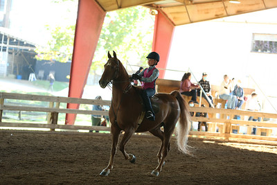 21) Academy W/T Equitation 8 yrs old & under