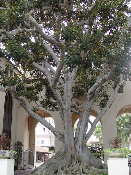 Tree in Los Angeles