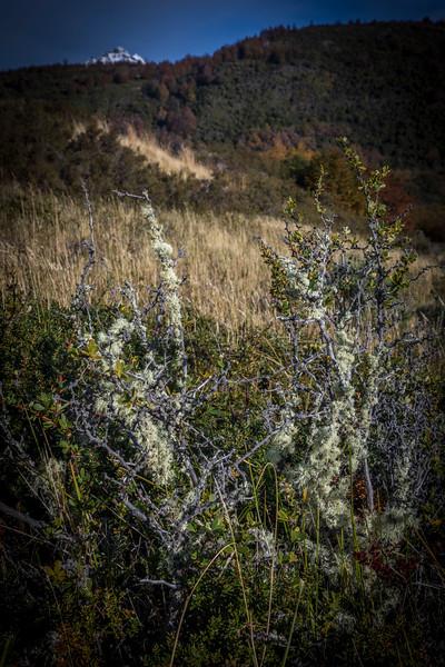 Field Greens TdP-2.jpg