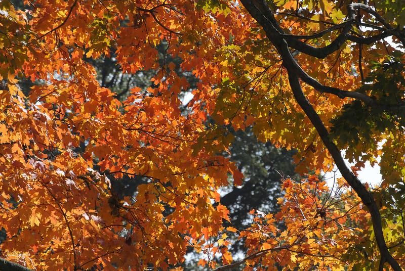2012-10-17 at 10-00-56.jpg