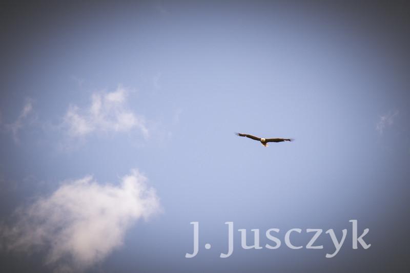 Jusczyk2021-6832.jpg