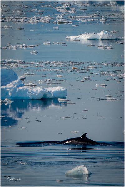 J85_7056 Whale LW.jpg