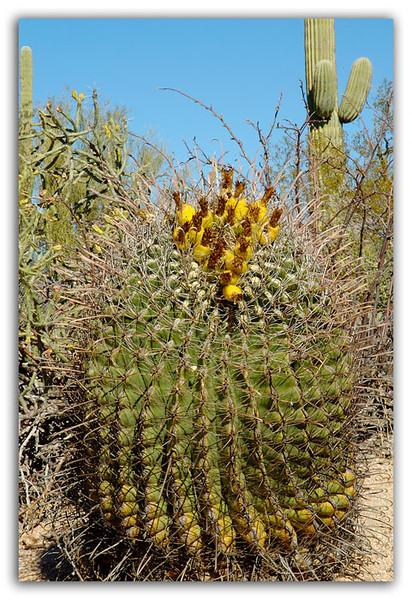 Colorful-Cactus.jpg