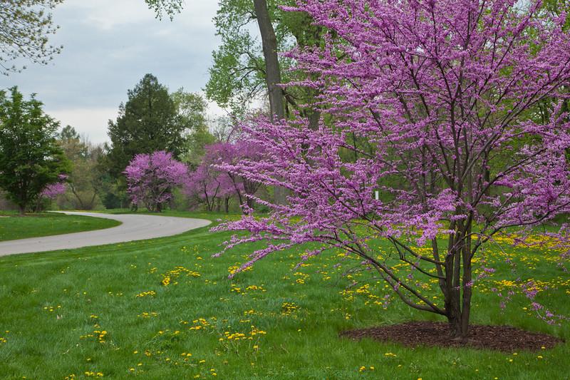 Spring13-0657.jpg