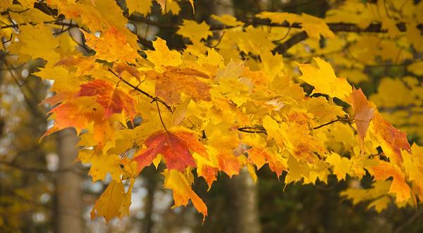 Fall Colors III 9-17-12