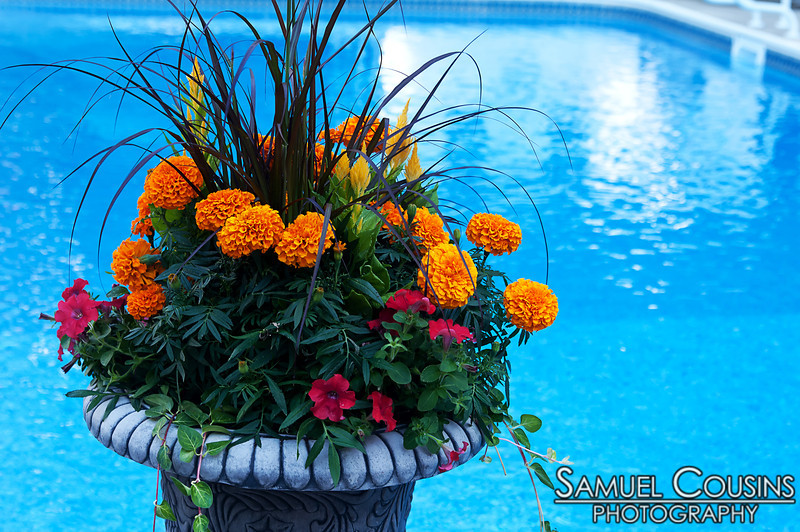 Flowers growing in a pot in front of a pool