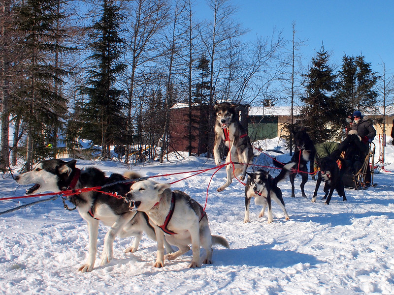 Dogsledding with Wapusk Adventures in Churchill, Manitoba