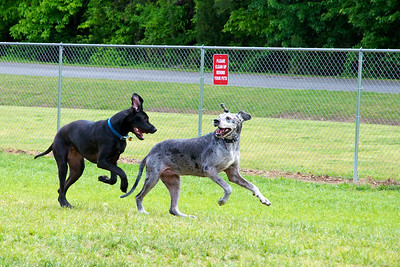 Sam & Bella at the Dog Park 4-08-11