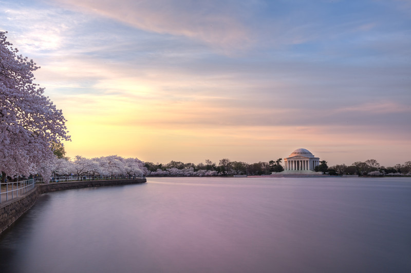 Cherry Blossom Festival at Sunrise