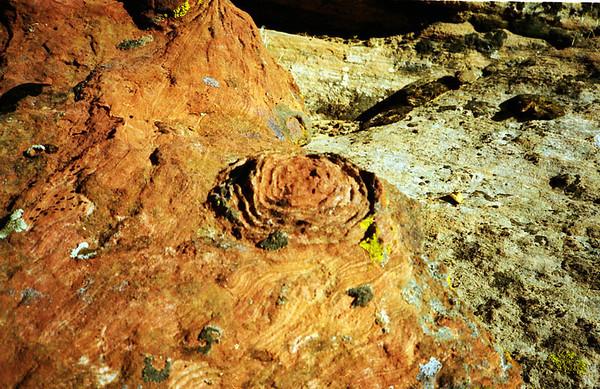 13 Desert Rose.jpg