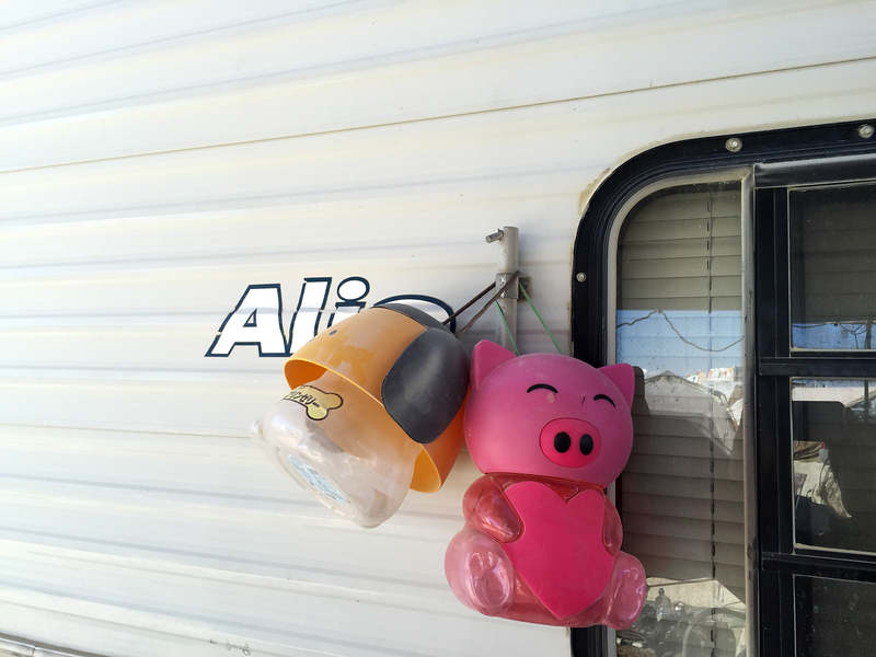 Dog and Pig Mascots for You Are That Pig Encampment