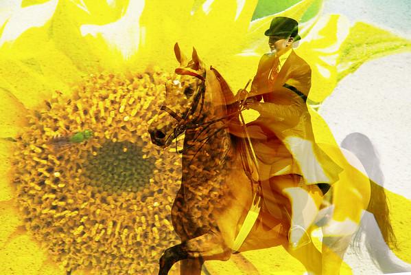 Devon Horse Show Captures