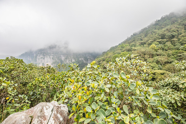 Chicaque Natural Park (2017-01-21)