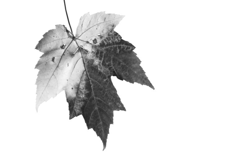 leaf_3166.jpg