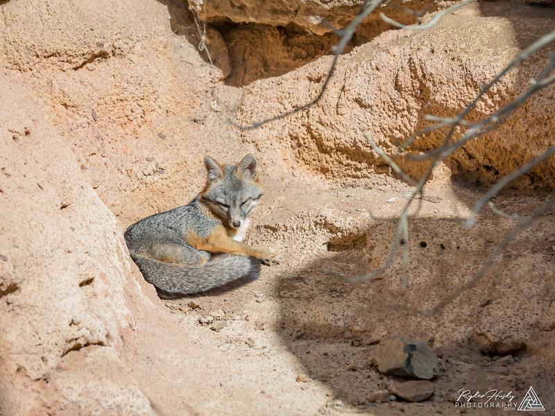 Arizona-Sonora Desert Museum-055.jpg