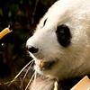 San Diego Zoo36