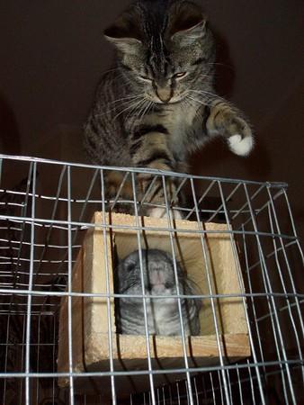 kitty vs. fuzzy