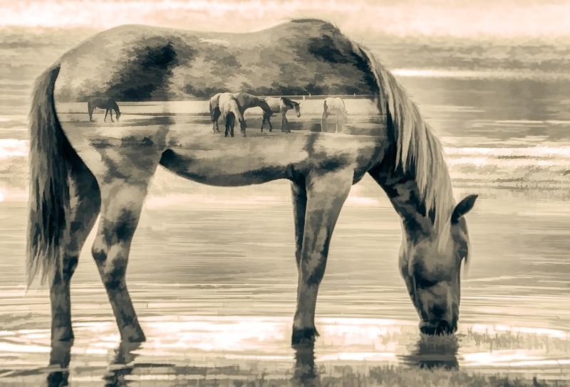 Salt River Horse Composite