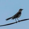 day 4 So FL Birding-374
