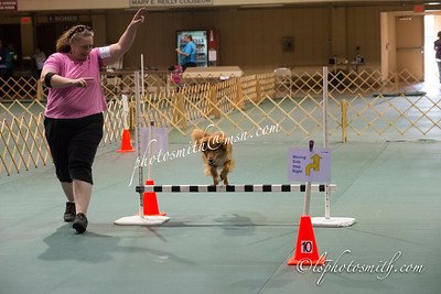 MOC Obedience Ring 4 rally  2014