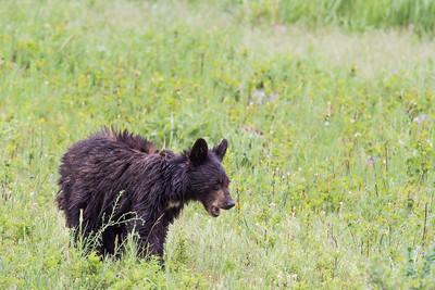 Yellowstone National Park - updated 11/30/2018