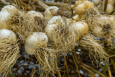 Heritage Garlic Farm
