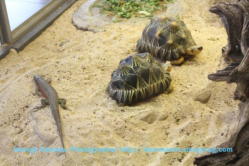 Tortoises from the desert.