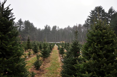 2012-12-02 - Christmas Tree Farm